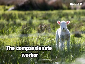 The compassionate worker